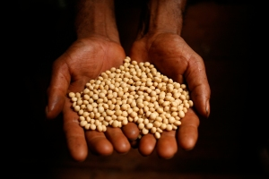 RAISING_RESISTANCE_soy_seeds